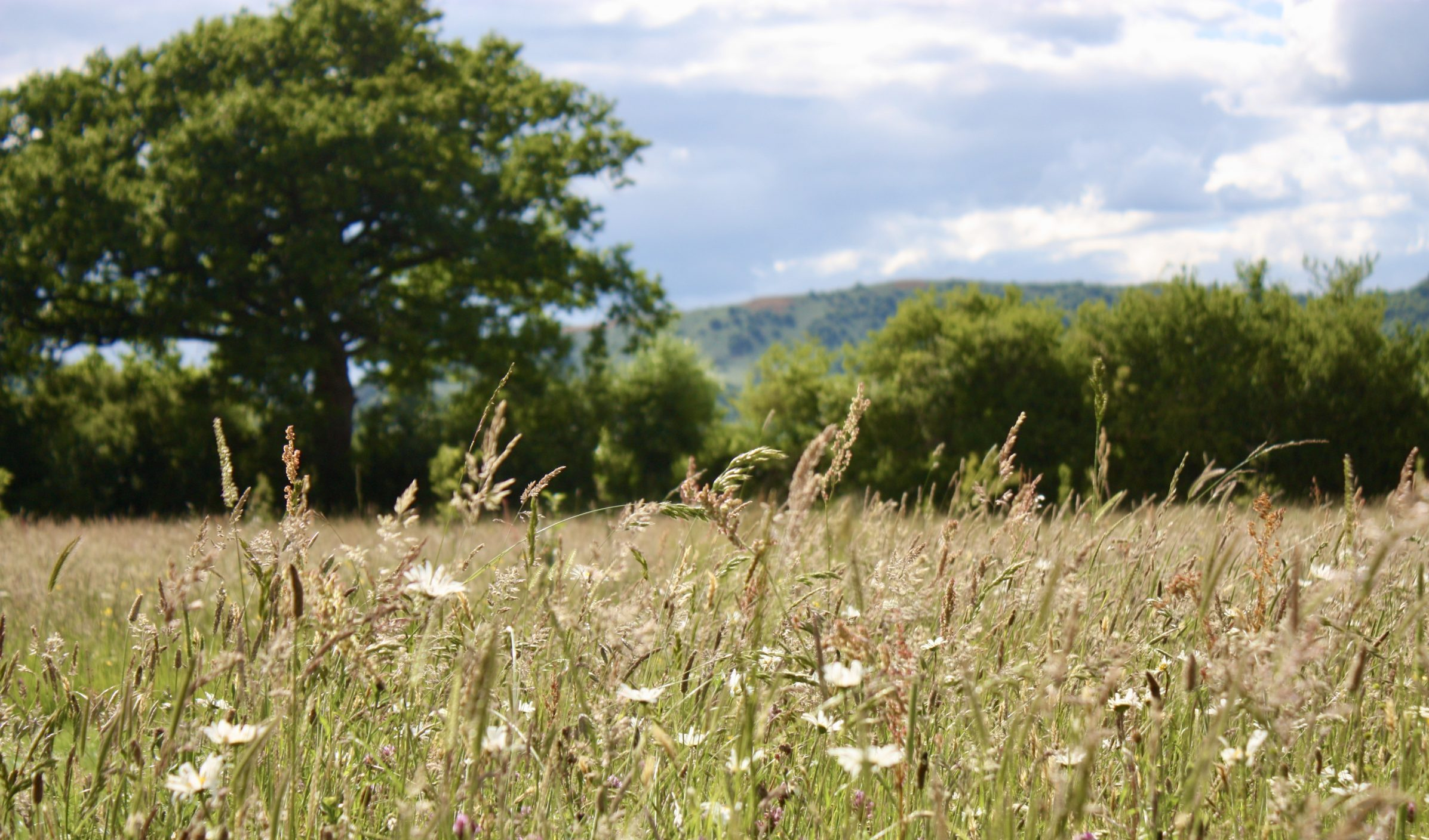 Restoring the Wildflower Meadow at Swallowfields Glamping Retreat