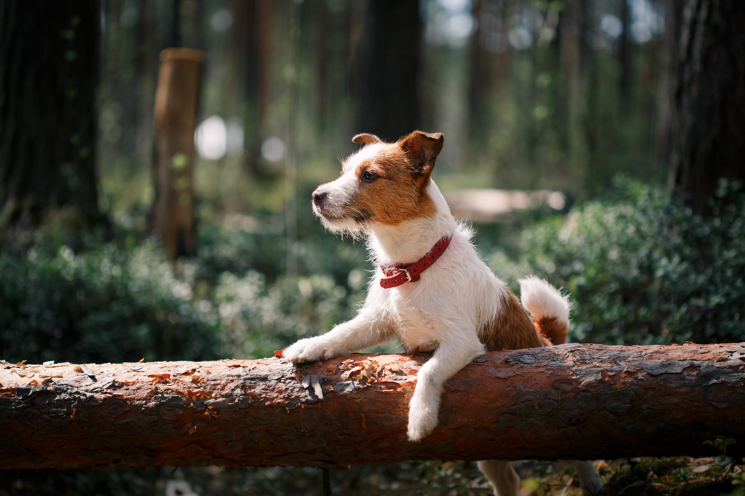 Set Tails Wagging: Dog Friendly Glamping in the Malvern Hills